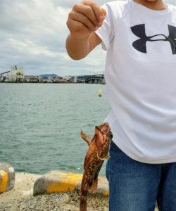 釣れたカサゴ